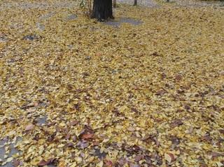 落ち葉の絨毯トリミングVER.jpg